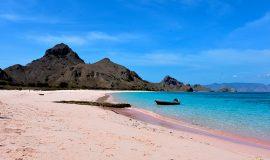 pink beach komodo island tours
